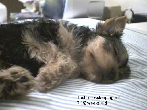 Tasha asleep as a puppy